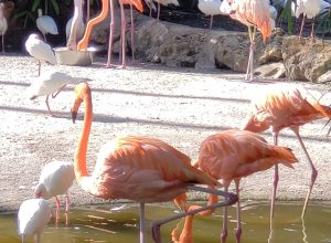 Day 5 : Flamingo Gardens