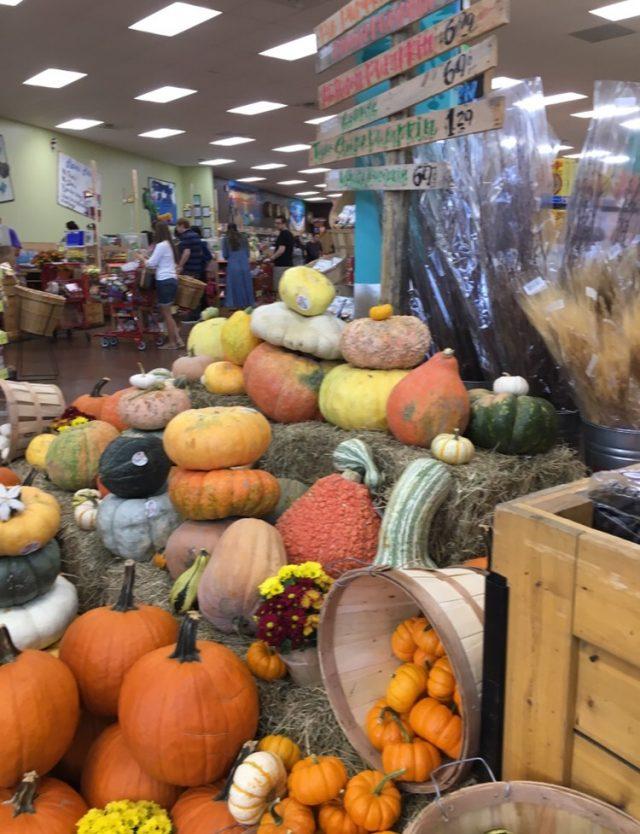 Squash or Pumpkin
